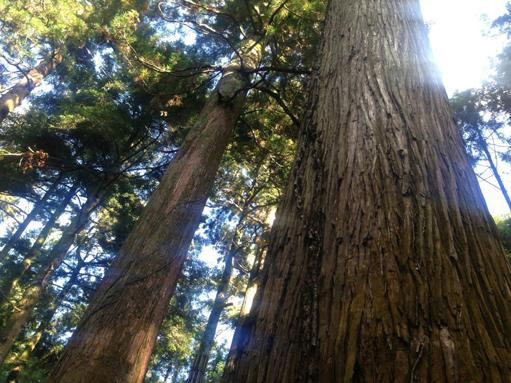 小田原の森